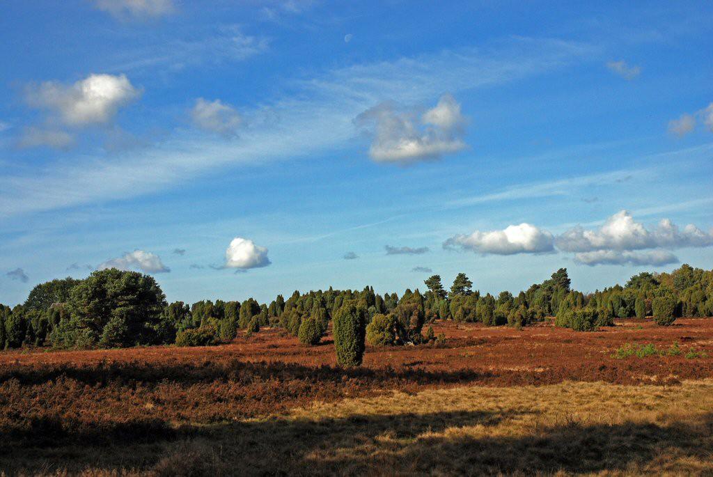 Naturschutzgebiet Lüneburger Heide © Jürgen Mangelsdorf/flickr