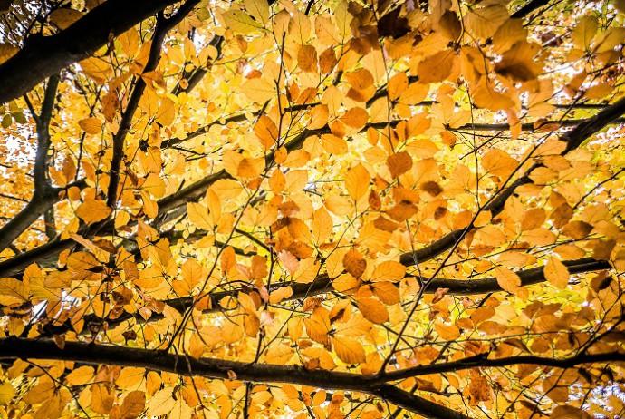 Seelenfutter für Herbsttage
