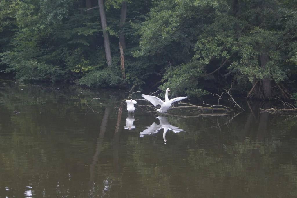 Hausboottour in Mecklenburg
