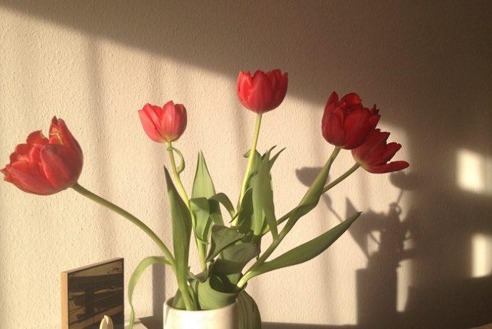 Wohngefühl mit Tulpen