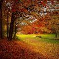 Gut gegen Herbstblues: Spaziergang
