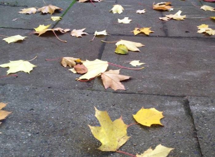 Diagnose leicht - auch im Herbst